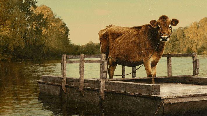 Jaap-Harm tipt nieuwe films: First Cow, Gunda, De Slag om de Schelde en meer
