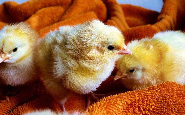 Waarom zou je in vredesnaam geen zuivel en eieren eten?!