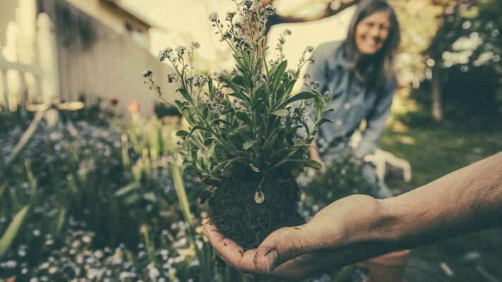 Hoe het werk op een tuinderij Elsa helpt om te ontdekken hoe het leven werkt
