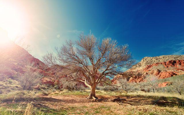 Dit kun je als gelovige leren van een boom